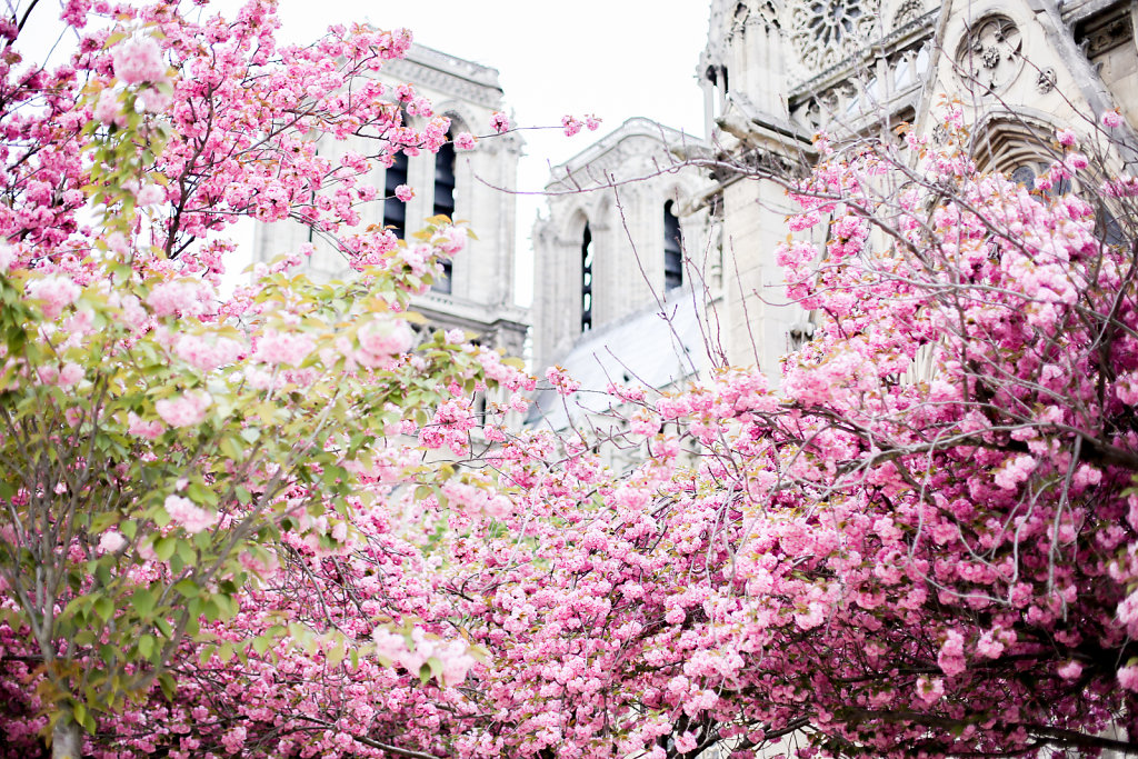 Spring in Paris (March 2015)