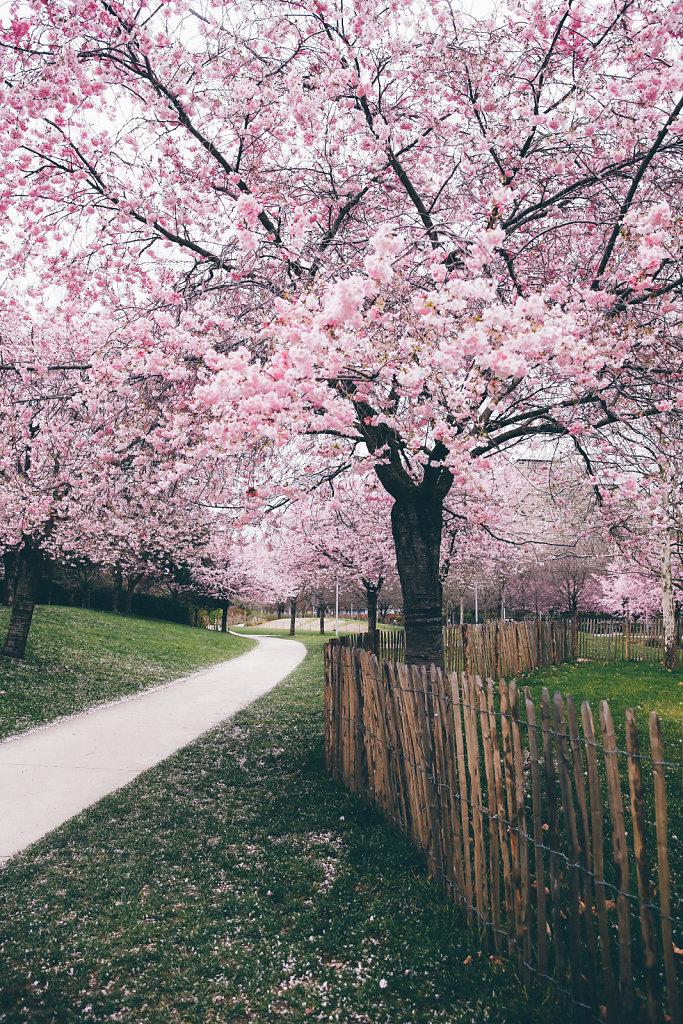 Paris-Jardin-Martin-Luther-King-en-fleurs-1.jpg
